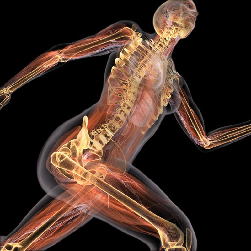 Биомеханика опорно-двигательного аппарата