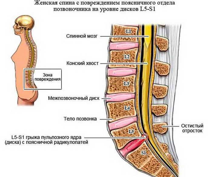 Анатомия пояснично-крестцового отдела
