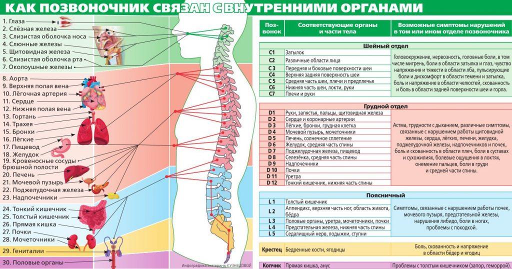 Связь позвоночника с внутренними органами