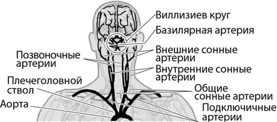 Позвоночные артерии и артерии головы