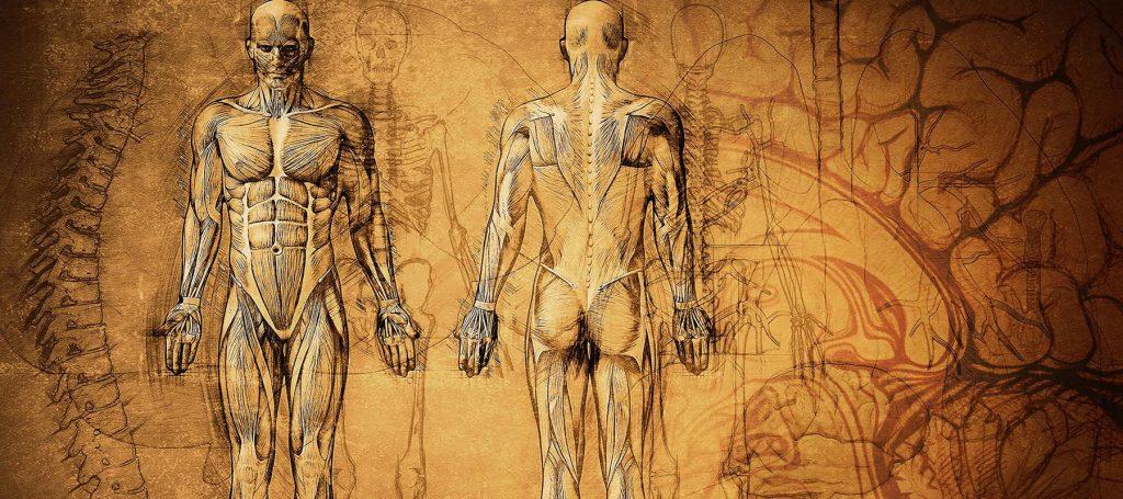 Историческое изображение строения человеческого тела