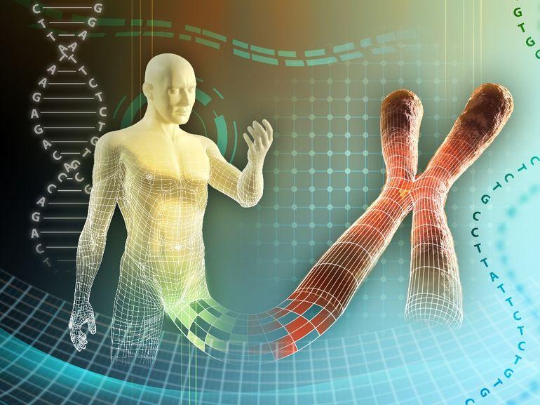 Наследственность и хромосомы