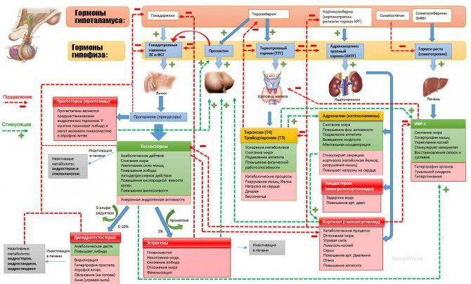 Особенности гормональной регуляции