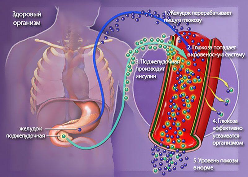 Усвоение глюкозы в норме