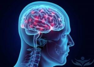 Схематическое изображение головы человека и головного мозга